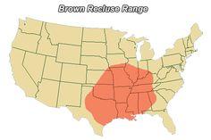 Brown Recluse range