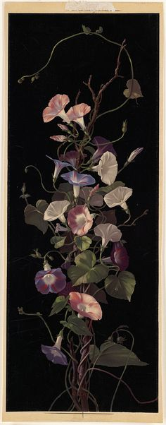Morning Glories | File name: 07_11_000998 Title: Morning Glo… | Flickr