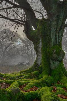 decepticun:  ancient tree|Kevin K.