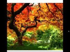 Méditation de l'arbre de vie - YouTube