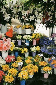 Flower market ❤️ ॐ ☀️☀️☀️ ✿⊱✦★ ♥ ♡༺✿ ☾♡ ♥ ♫ La-la-la Bonne vie ♪ ♥❀ ♢♦ ♡ ❊ ** Have a Nice Day! ** ❊ ღ‿ ❀♥ ~ Th 16th July 2015 ~ ❤♡༻ ☆༺❀ .•` ✿⊱ ♡༻ ღ☀ᴀ ρᴇᴀcᴇғυʟ ρᴀʀᴀᴅısᴇ¸.•` ✿⊱╮ ♡