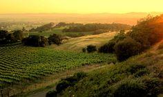 Another beautiful sunset...Paradise Ridge in Sonoma County, California.