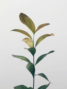 #plantlove