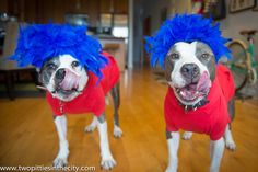 DoggyStyle: On Last Minute Dog Costumes
