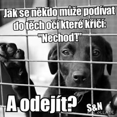 Nikdy...mám jednoho šťastného doma Humor, Inspirational Quotes, Motivation, Memes, Dogs, Animals, Animal Pictures, Life Coach Quotes, Animales