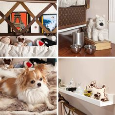 Pawsh Magazine:  dog-room-details