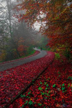~~Mon monde rouge | red autumn road, Bolu, Turkey | by Zeki Seferoglu~~