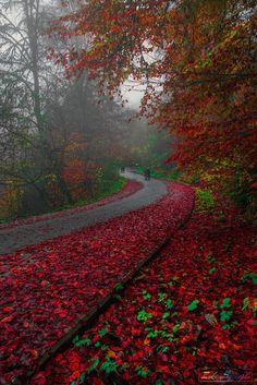 ~~Mon monde rouge | red autumn road, Bolu, Turkey | by Zeki Seferoglu~~