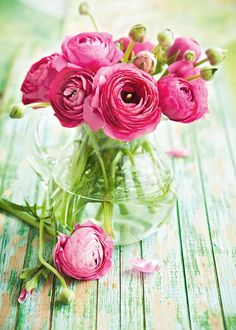 Flores Discover The best time to plant spring flowers anenomes and ranunculus The best time to plant spring flowers anenomes and ranunculus - thisNZlife Exotic Flowers, Amazing Flowers, Love Flowers, Colorful Flowers, Wedding Flowers, Spring Blooms, Spring Flowers, Anenome Flower, Cactus Flower