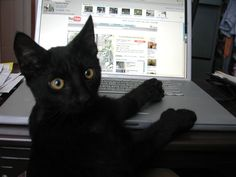 shadow_computer1 This is so cute. Black cat working really hard. Thejavawitch