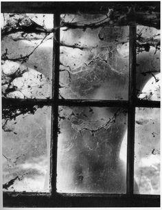 Nude Behind Cobwebbed Window, 1955  byWynn Bullock