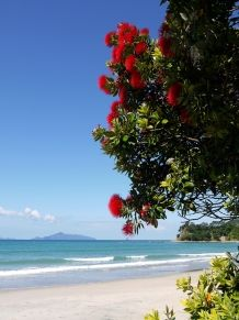 New Zealand: red flowering tree at beach. Empty beach with flowering native Chri , Red Beach, Sunny Beach, Tasmania, Places To Travel, Places To See, Take Me Away, New Zealand Beach, Beach Flowers, A Whole New World