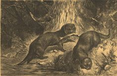 1883 Otters Antique Engraving  Brehm's Life of by CarambasVintage, $16.00