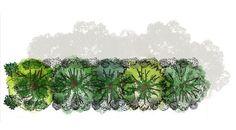Ici illustrée, la guilde du kiwi, un bel exemple d'associations de végétaux en permaculture pour créer une forêt comestible et cultiver son abondance !
