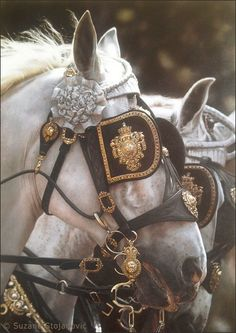 The King 2011. Original oil on canvas painting by Suzana Stojanovic Series The Magical World of Horses