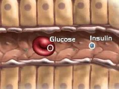 Role of pancreas in endocrine system