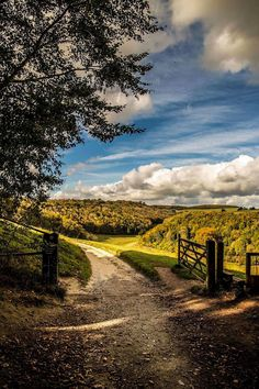 Arundel Park (West Sussex, England) [photographer unknown] cr.c.
