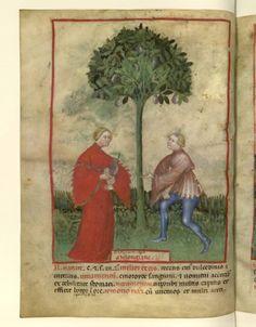 Nouvelle acquisition latine 1673, fol. 25v, Récolte des aubergines. Tacuinum sanitatis, Milano or Pavie (Italy), 1390-1400.