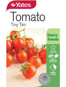 Tomato 'Tiny Tim' - true dwarf ruges leaves (recessive trait) with cherry fruit