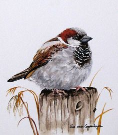 Sparrow by Sue Van Coppenhagen → For more, please visit me at: www.facebook.com/jolly.ollie.77