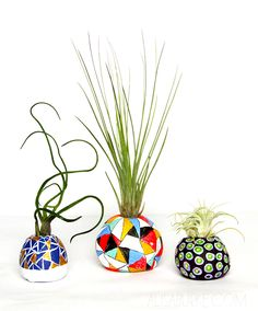 alisaburke: air plant pots