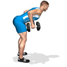 BENT OVER TWO DUMBBELL ROW INVOLVED MUSCLES DURING THE TRAINING LATS