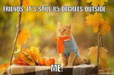 Memes for people who hate summer and cant wait for the fall Photos) Fall Humor, Fall Memes, Hate Summer, Funny Memes, Hilarious, Happy Fall Y'all, Kawaii, Hello Autumn, Autumn Inspiration