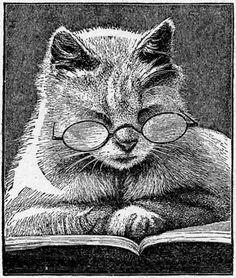 Cat reading a book!!!