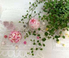 eiko araki ''Rose Garden''
