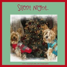 Dog Meme, Christmas, Yorkie, https://www.facebook.com/FenwayFamily