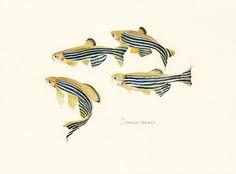 魚譜画家・長嶋祐成のウェブサイトです。魚を専門に絵画・イラストレーションを制作しています。