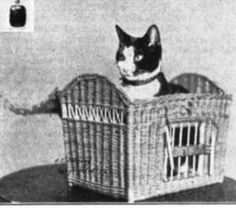 Kaiser, the Equitable Fire Cat, who survived the deadly fire at New York's Equitable Building in January 1912.