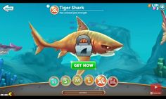 The tiger of the sea, Tiger shark from hungry shark world.