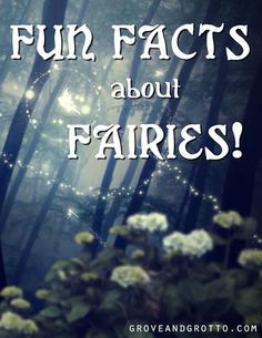 Ever wanted to learn more about fairies? Here are some tidbits of fairy knowledge from Michelle, Grove and Grotto's own shop fairy. 1. Fairy wings aren't just f