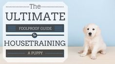 Housetraining a Puppy: The Foolproof Guide