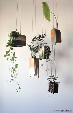 Houseplants That Filter the Air We Breathe Hanging Garden. Diy Hanging Planter, Hanging Vases, Window Hanging, Planter Ideas, Green Plants, Potted Plants, Indoor Plants, Plante Crassula, Plantas Indoor