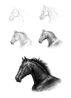 How To… Sketch, Draw, Paint (and all other art forms).: How To Draw… A Horse's Head By Monika Jasnauskaite Horse Head Drawing, Pony Drawing, Horse Drawings, Pencil Art Drawings, Animal Drawings, Drawing Sketches, Drawing Tips, Amazing Drawings, Easy Drawings