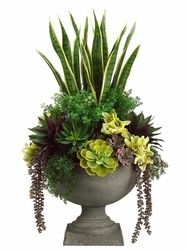 "Stunning succulent and ""mother-in-law tongue"" arrangement."