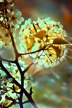 Full Moon Blossoms: Stefanie Jasper