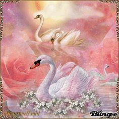 Swans Beautiful Swan, Beautiful Birds, Watercolor Flowers Tutorial, Watercolor Art, Swan Wallpaper, Kitsch, Hummingbird Painting, Montage Photo, Wildlife Paintings