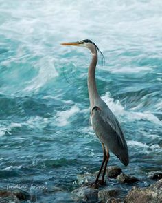 Blue Heron Bird Photography, Aqua Teal Slate Navy Blue Water Photo, Water Birds Wildlife Art, Ombre Blues Rolling Rapids River Lake Print