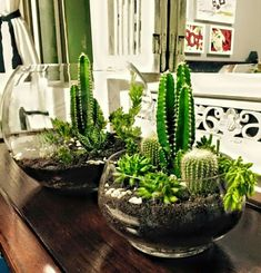 When you have identified your cactus type, you have to create the most suitable atmosphere for it. An assortment of cactus house plants appear good together. There are several different kinds of cactus combo bonsai plants. Succulent Gardening, Cacti And Succulents, Planting Succulents, Cactus Plants, Garden Plants, Indoor Plants, Planting Flowers, Succulent Ideas, Indoor Cactus Garden