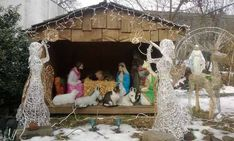 16 Times Cats Hilariously Crashed Nativity Scenes