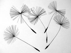 Dandelion Framed Print featuring the photograph Dandelion - Black And White Dandelion Art by Wall Art Prints Buchgenres Dandelion - Black And White Dandelion Art Framed Print Dandelion Drawing, White Dandelion, Dandelion Designs, Dandelion Flower, Flower Wall, Motif Floral, Arte Floral, Realistic Drawings, Ink Drawings