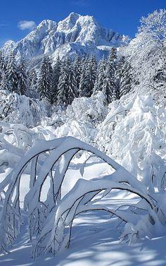 Crisp clean snow scene