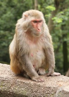 Wild monkeys can legally be captured from the wild and held captive as domestic pets in Mauritius, despite the severe psychological damage it causes them. Demand that this inhumane practice be made illegal.
