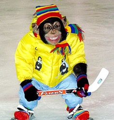 Mikey goes ice-skating with a chimp-sized hockey stick.