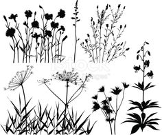 Set of variable meadow plants and flowers.