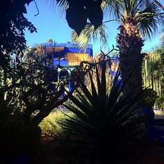 "#ElenaBarolo Elena Barolo: ""Beautiness"". #majorelle #jardindemajorelle #bluemajorelle #saintlaurent #nature #marocco #marrakech #morocco #africa #travel #donnavventura #thatsoaffashionate"