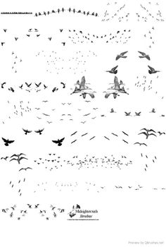 42 Birds of a feather photoshop brushes PS Collage Architecture, Architecture Graphics, Architecture Visualization, Architecture Drawings, Landscape Architecture, Landscape Design, Photoshop Png, Texture Photoshop, Photoshop Brushes